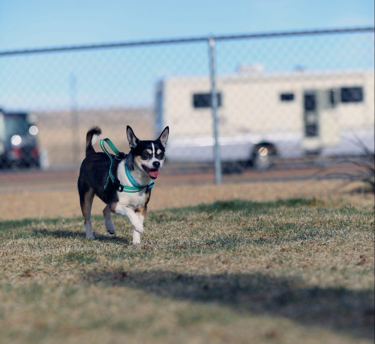 Route 66 RV Resort - dog park