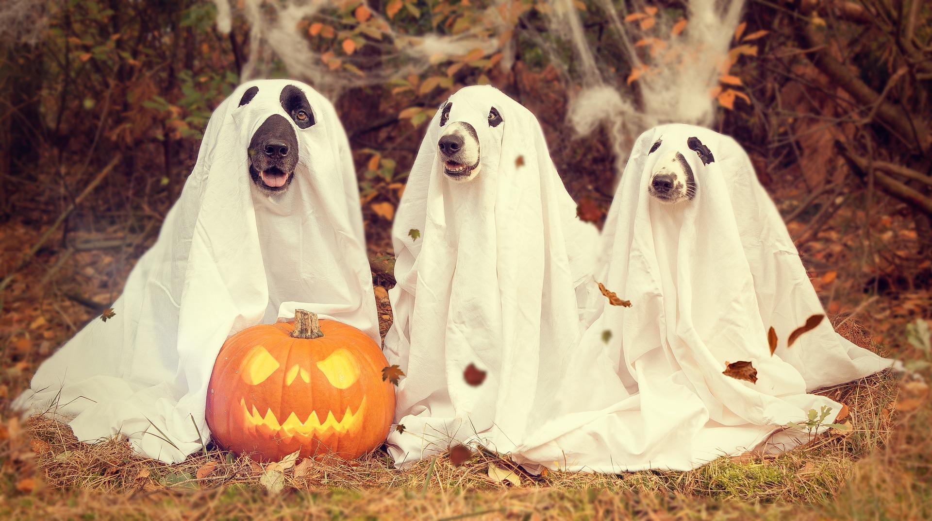 rv halloween parties