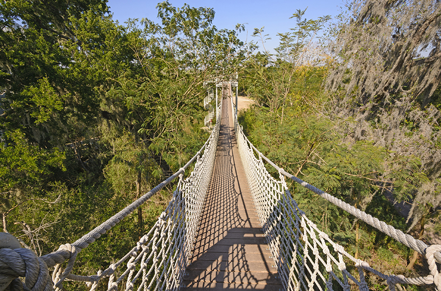 A canopy walk stretches across a Subtropical Forest in the Santa Ana Wildlife Refuge.