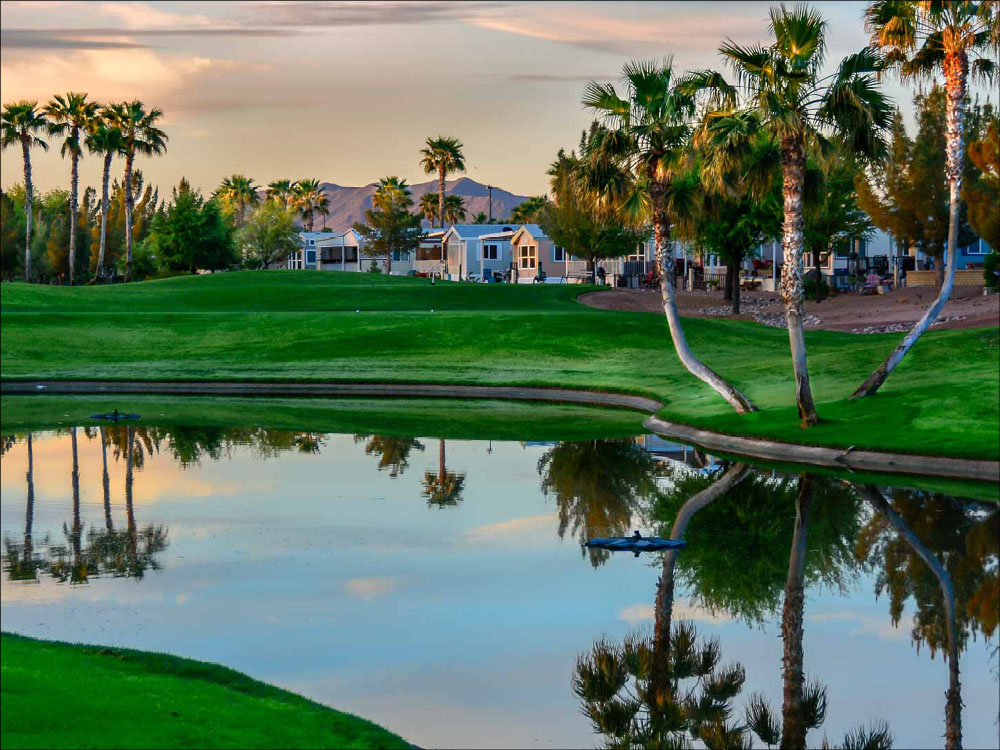 Beautiful lake reflection of green grass, palm trees and buildings