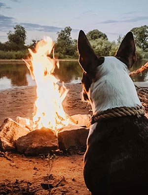 A dog basks in the warmth of a campfire.