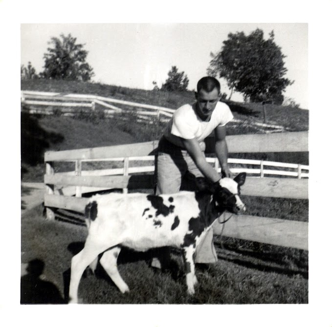Black and White photo of man petting a small cow