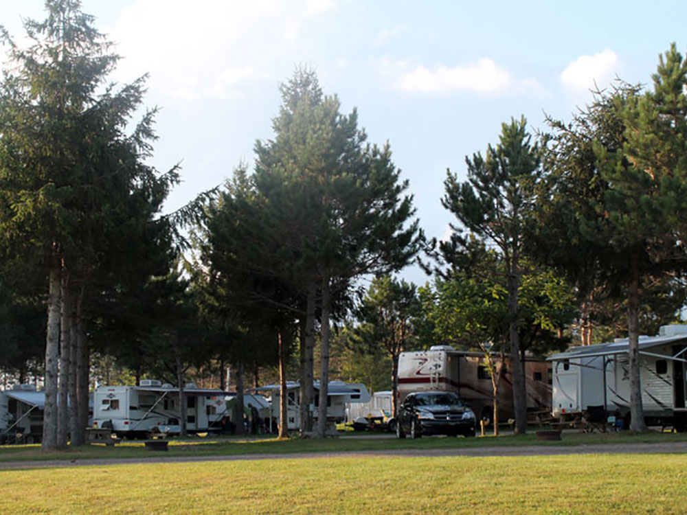 Multiple RVs parked around tall green trees.