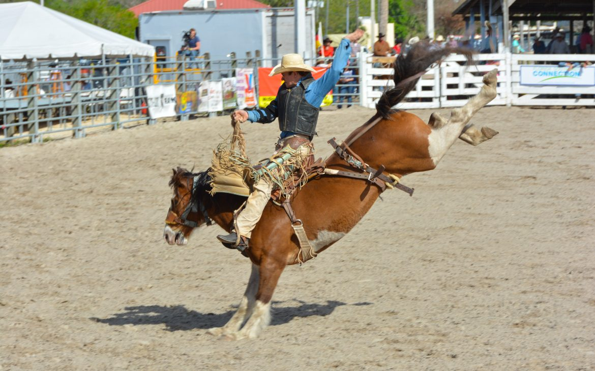 Cowboy on horse at rodeo
