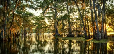 Louisiana swamp with trees reflecting in water