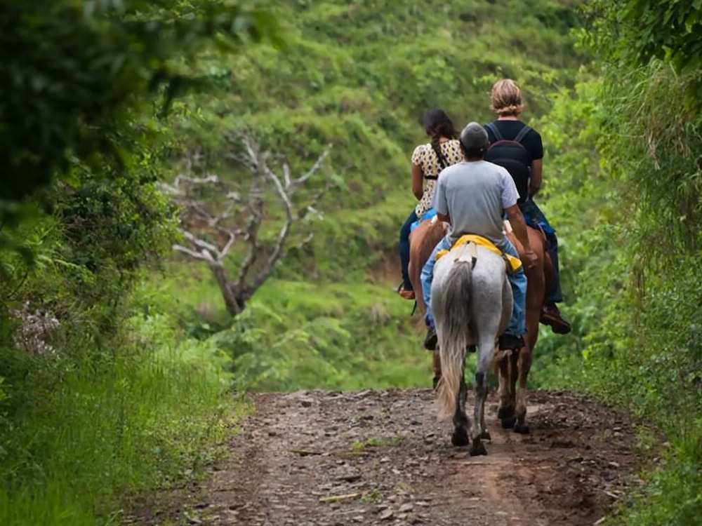 Group riding horses through lush forested area