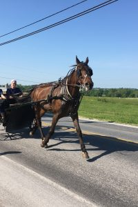 Two members of the Amish community being pulled in buggy by large horse