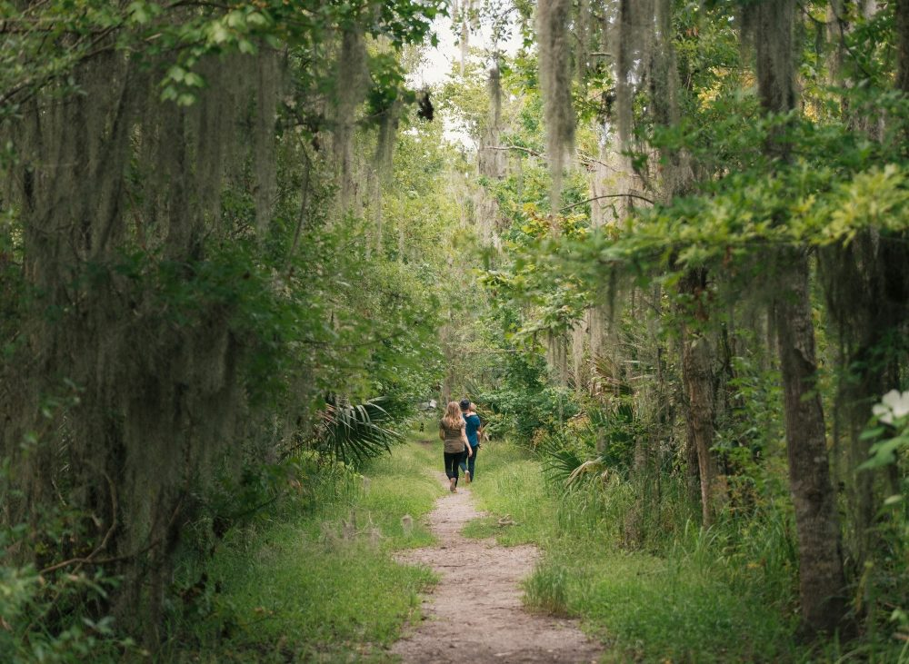 Lush green forested area with couple walking a dirt road