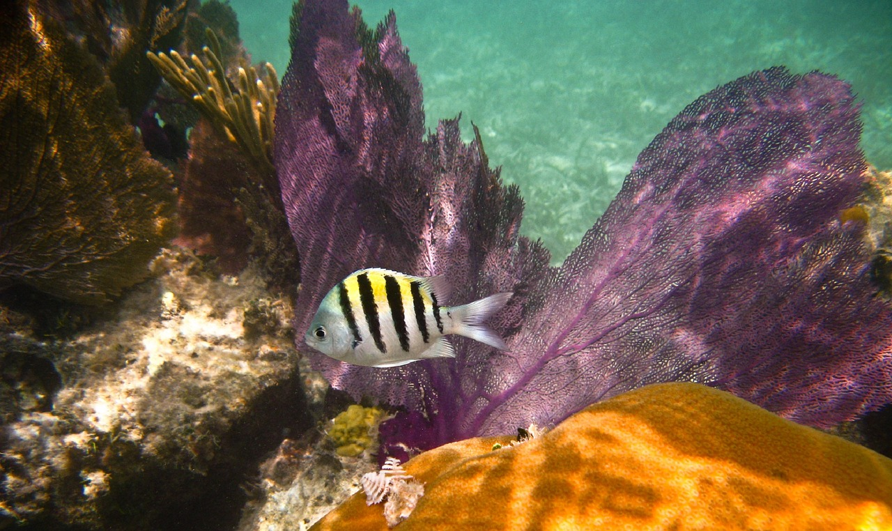 A fish swimming in a reef habitat.