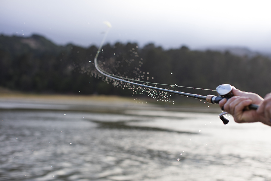 A rod bends as an angler swings it back for a cast.
