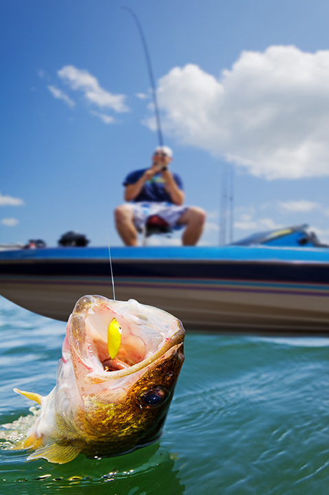 A fish bits down on a hook as a fisherman gets ready to haul it in.