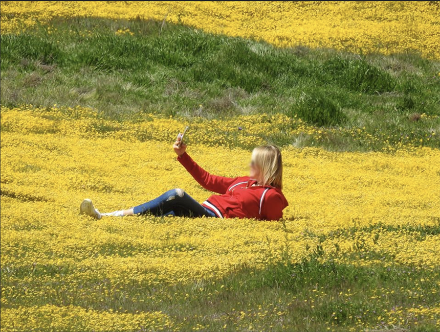 Super Bloom selfies leave damage in their wake.