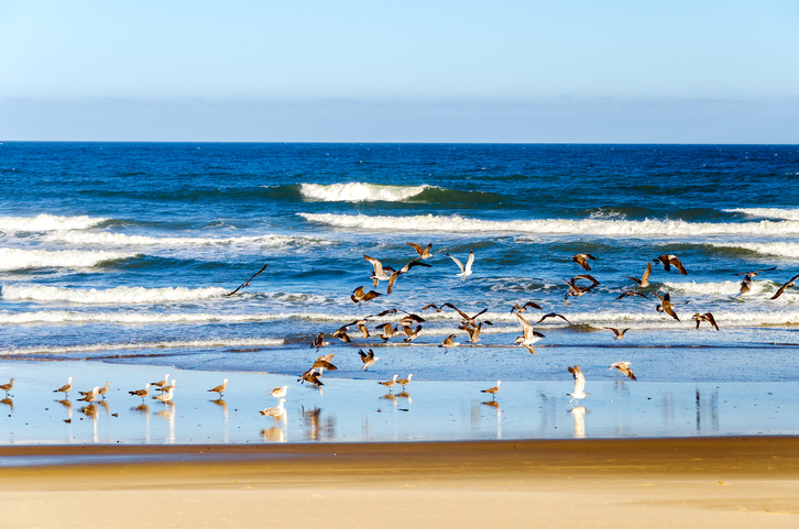 Beach and Pacific Ocean at Lincoln City, Oregon with seagulls