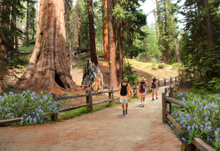 People on hiking trip in the forest. Family exploring sequoia trees. General Grant Tree Trail, Kings Canyon National Park