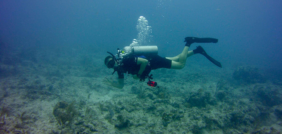 Swimming along the ocean floor around Dry Tortugas National Park. Photo: NPS