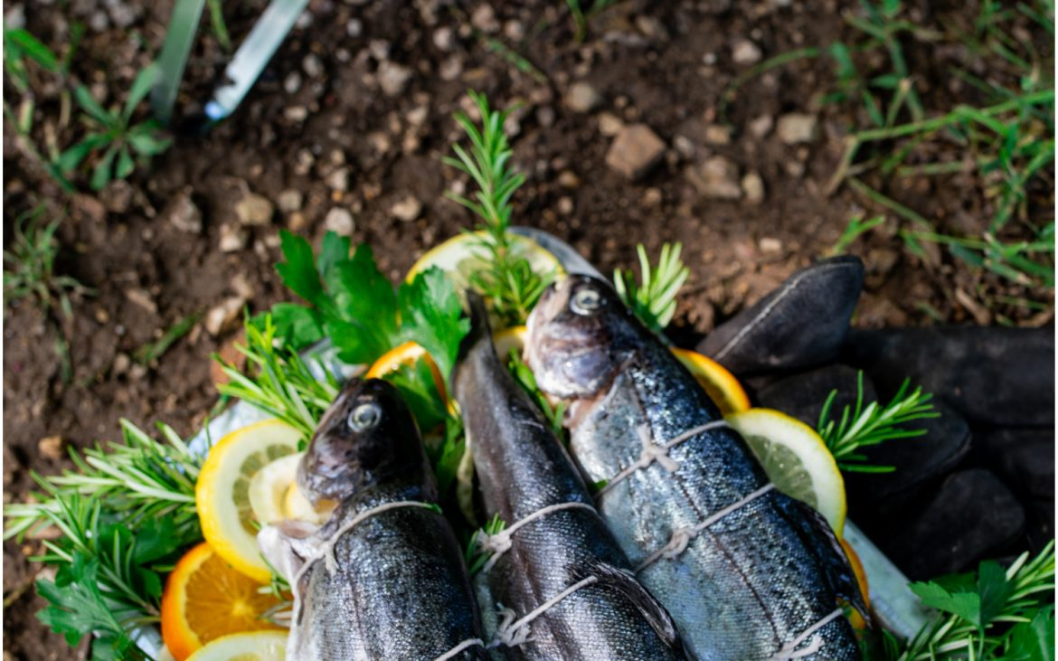 Three trout fish with lemon and herbs near grill