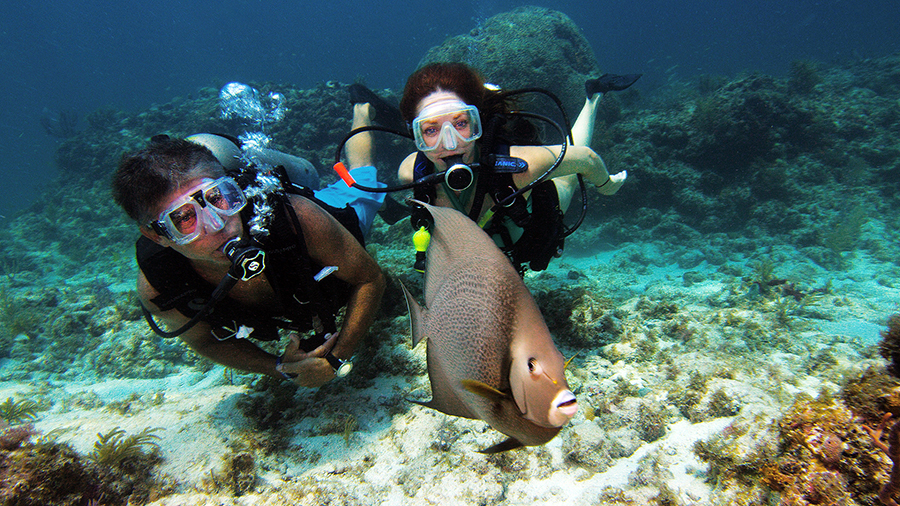 A man and woman in scuba gear swim toward a coffee-colored fish.