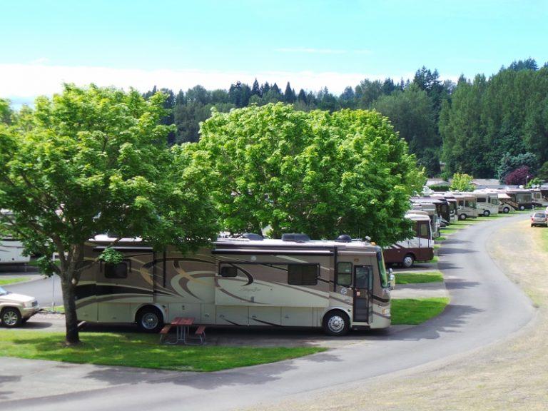 Large tan RV parked along large tree