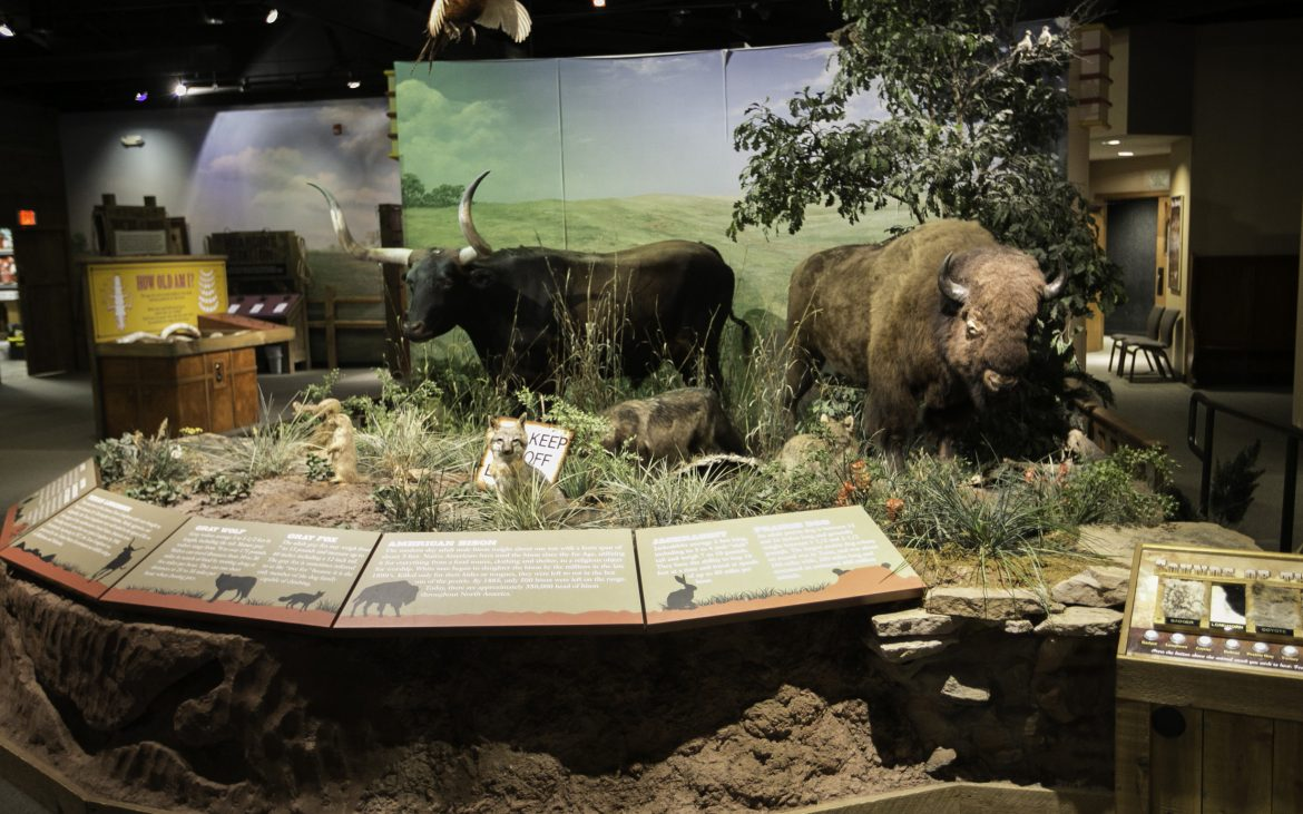 Museum display of Buffalo