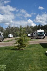 Many RVs and Trailers along landscaped greens