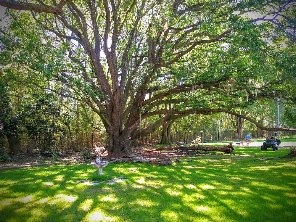 A massive tree extends shady branches for guests at Alabama Coast Campground, a new Good Sam Park