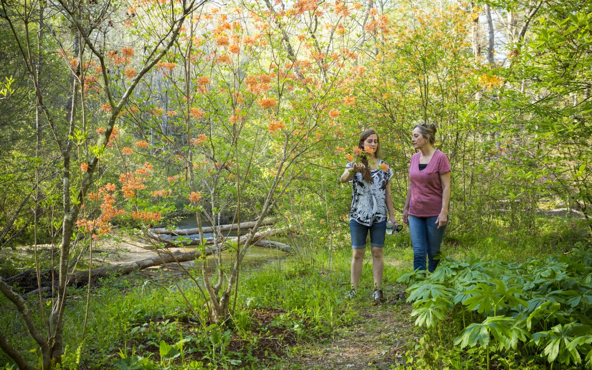 Two ladies hiking in beautiful gardens with azaleas