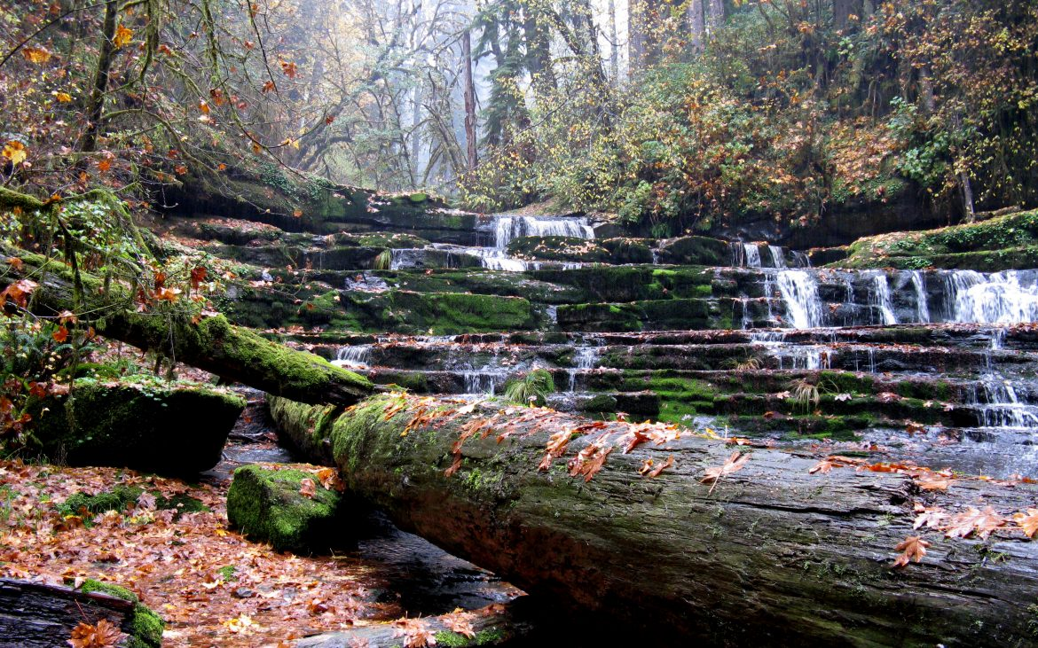 Rustic waterfall and stream with logs and moss