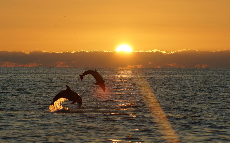 2 dolphins leaping at sunset near Sanibel Island Florida