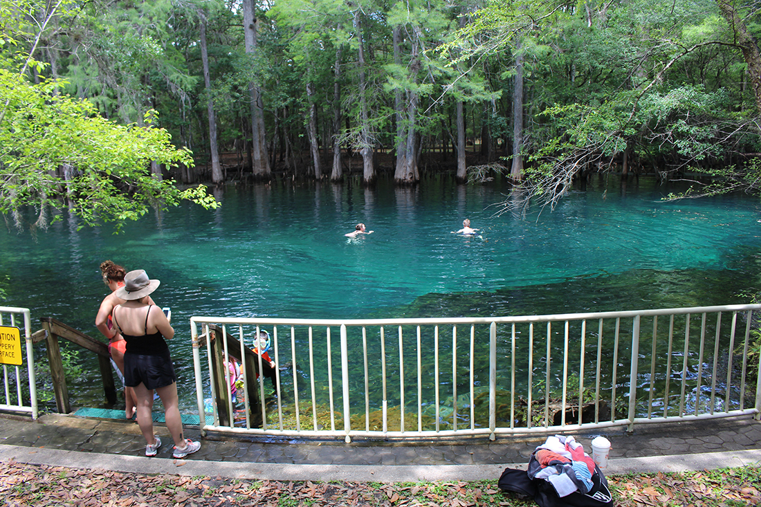 Swimming enjoy clear spring waters in Manatee Springs State Park.