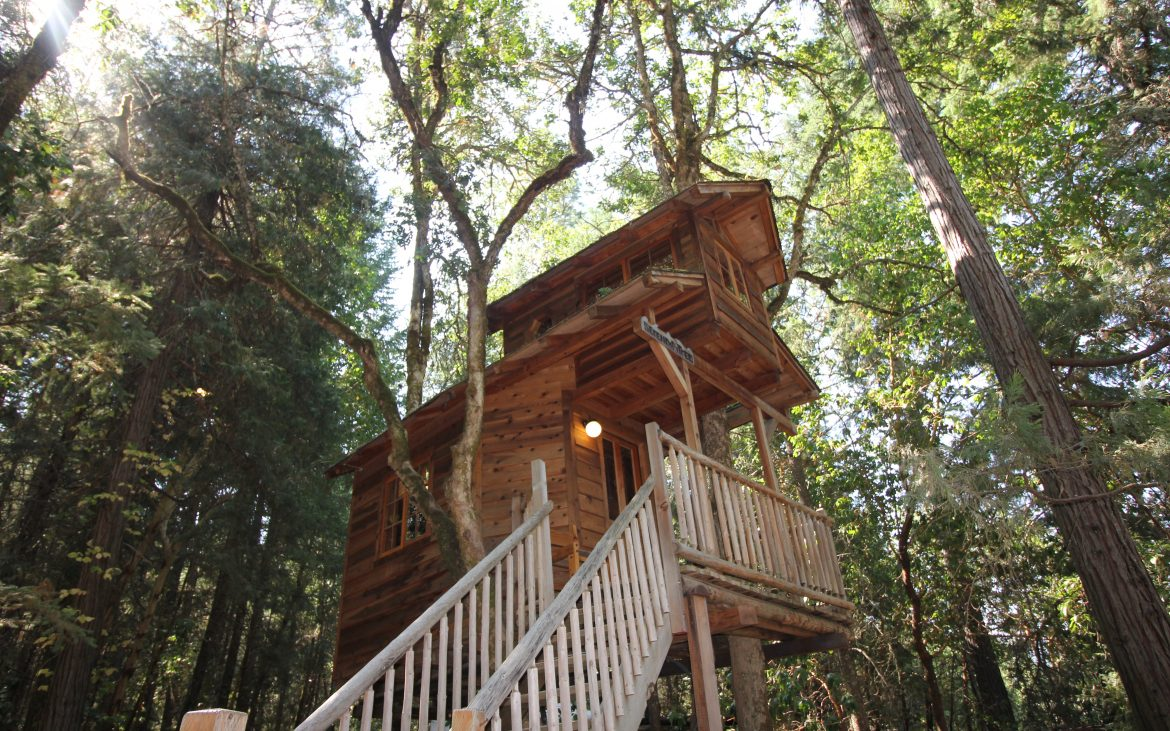 Large treehouse high up in the trees with stairs
