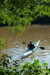Kayaking on the bayou.