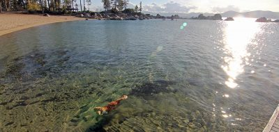 A dog cools off in Lake Tahoe under a hot sun. Photo: Nevada Tourism