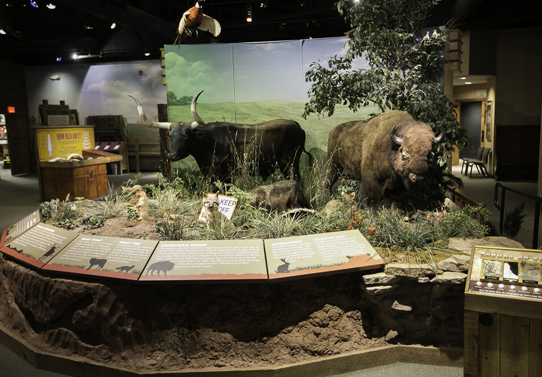 Exhibits display mammals along with their prairie habitat.