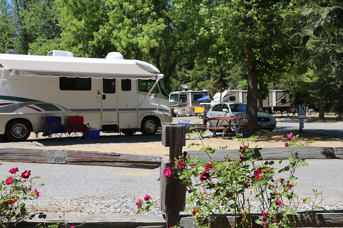An RV parked in a forested area with roses in the foreground in Yosemite.