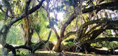 Light peeking through densely wooded area