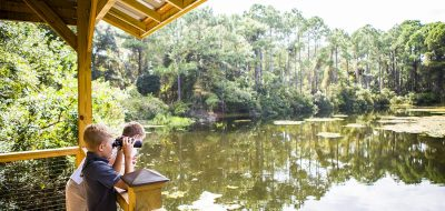 Observing wildlife on a shimmering pond.
