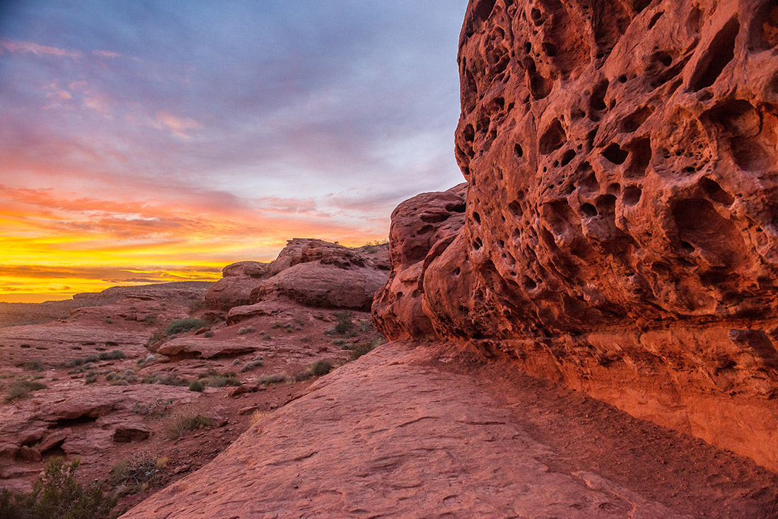 A red rock face riddles with holes in Red Cliffs National Conservation Area