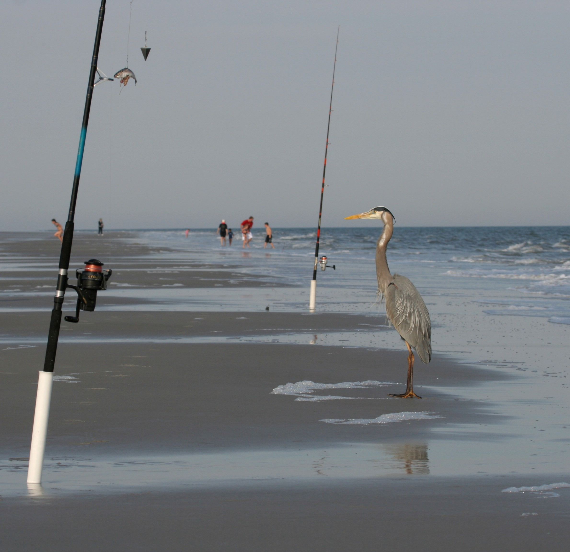 Two fishing poles stand planted in the sand as a seabird looks on.
