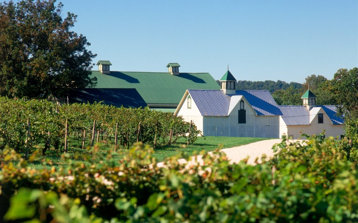 Winery buildings among lush vineyards in Maryland