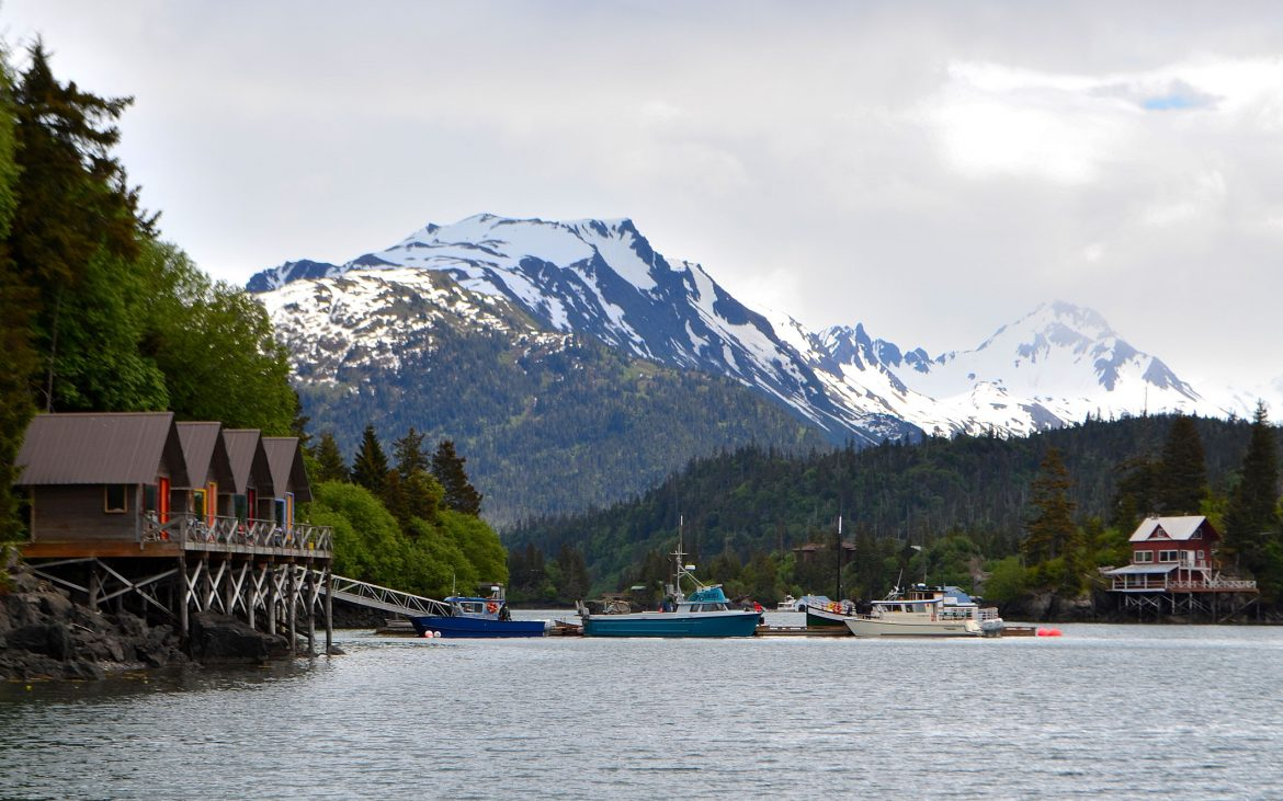 Homer Alaska, Halibut Cove