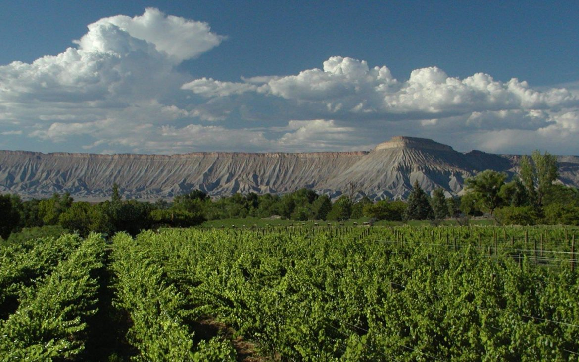 Beautiful view of wine vineyards and mountains in Colorado