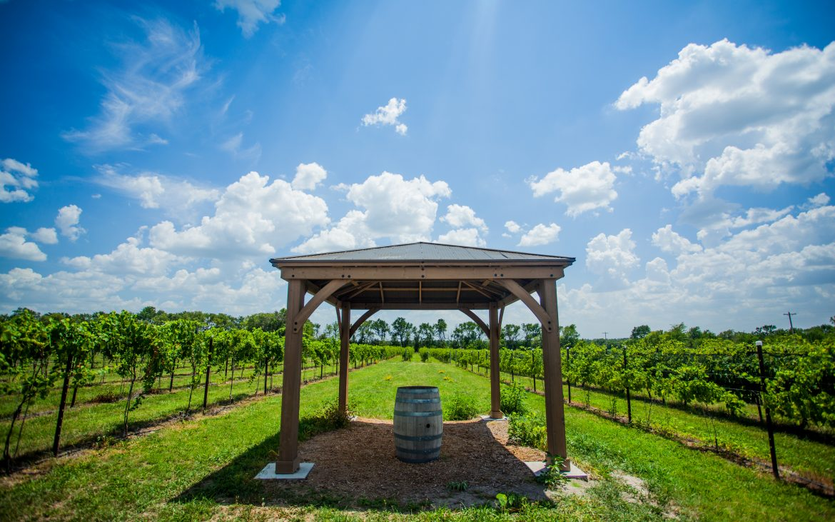 Beautiful vineyard with patio covering one barrel