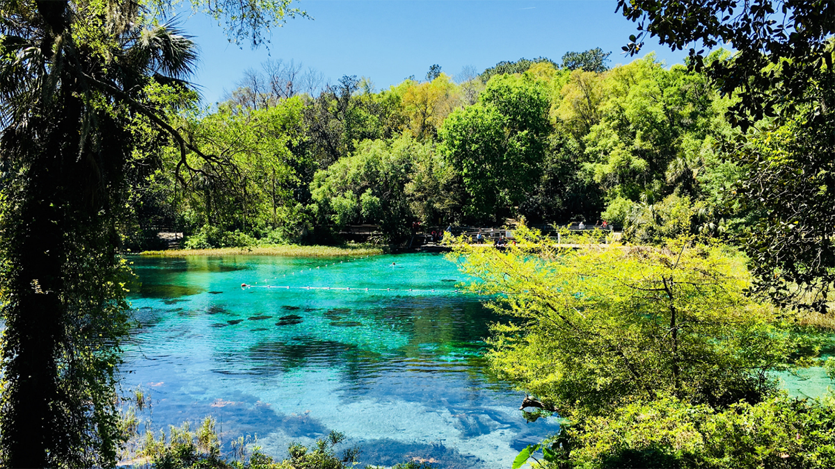 Clear waters of rainbow springs fringed by lush trees.