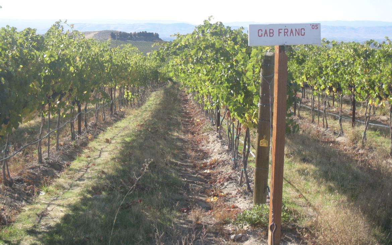 Vineyards on sunny day
