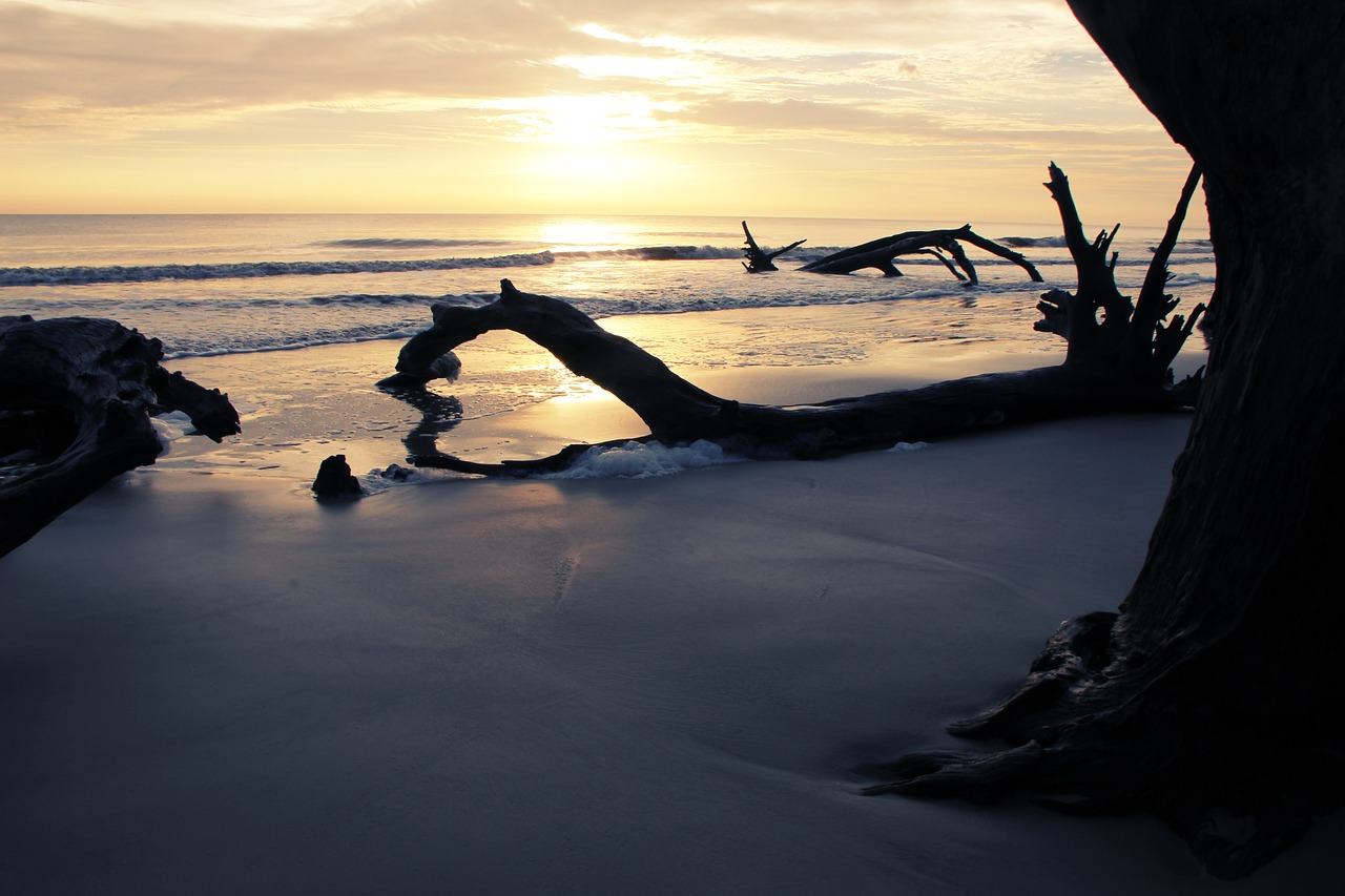 A sunset view with driftwood and shimmering waters.