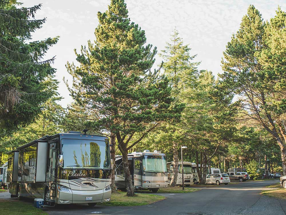 RVs parked under lush pine trees and facing a paved road.
