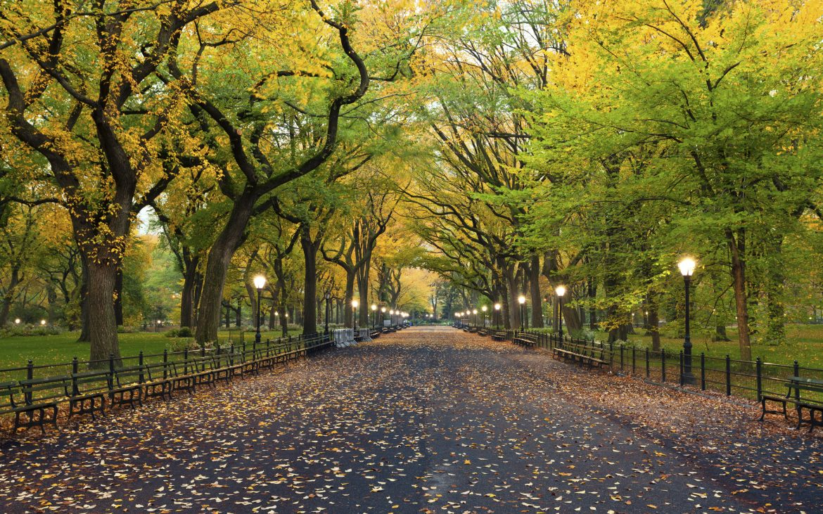 Canopy of lush green and yellow trees with leaves on the wide walkway at Central Park