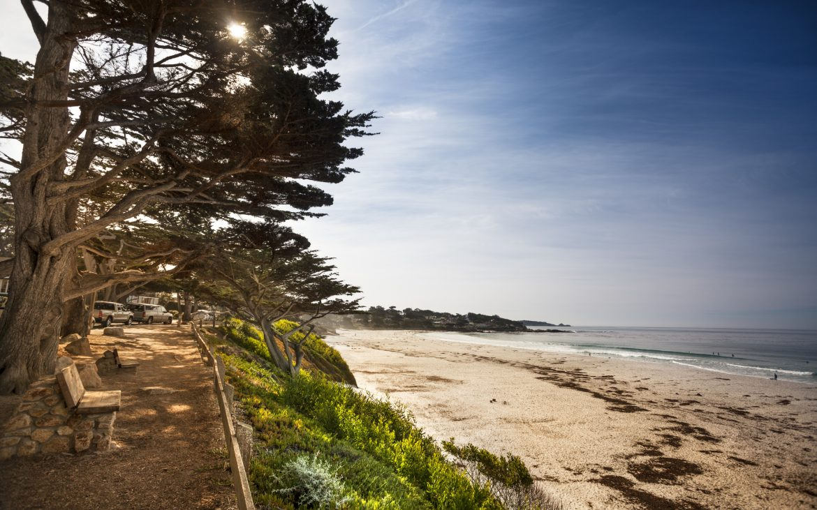 Sand beach and pine trees by the ocean in Carmel