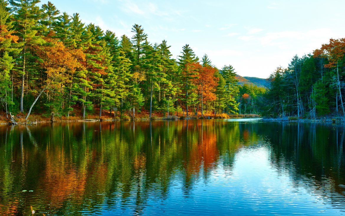 Pond in White Mountain National Forest, New Hampshire, trees reflecting in water