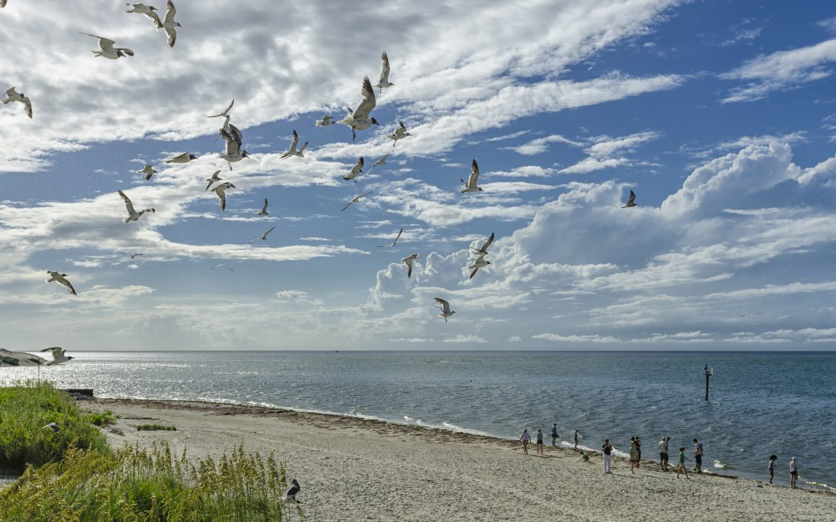 Seagulls off the coast of Ocracoke Island in the Outer Banks
